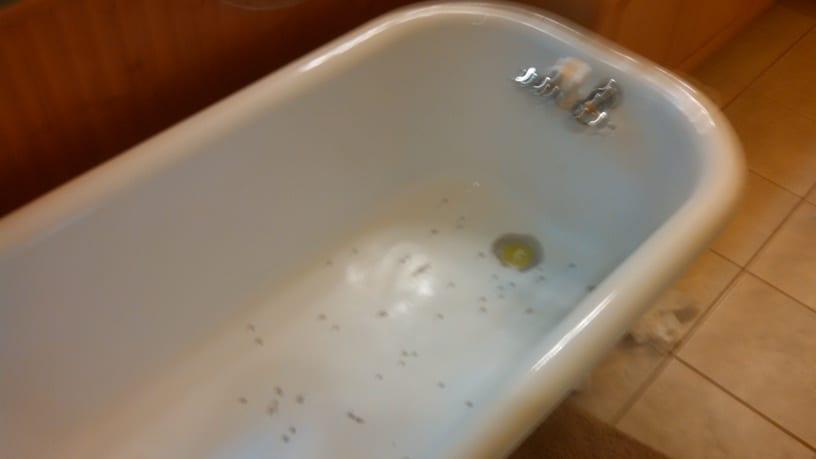 Bathtub Resurfacing Service Ann Arbor Mi